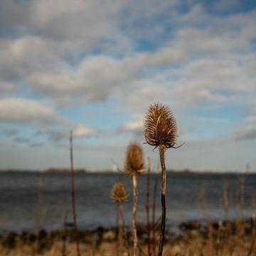 An der Küste von Femke Sijtsma
