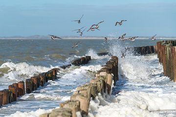 Vogels aan het strand van Henk Verstraaten