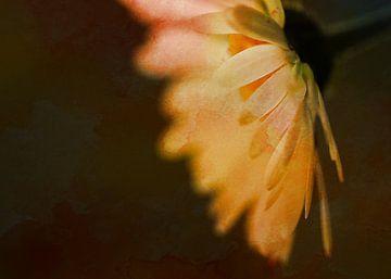 daisy (bew) van Yvonne Blokland