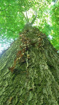Van beneden naar boven, zicht vanaf boomstam van Deborah Blanc