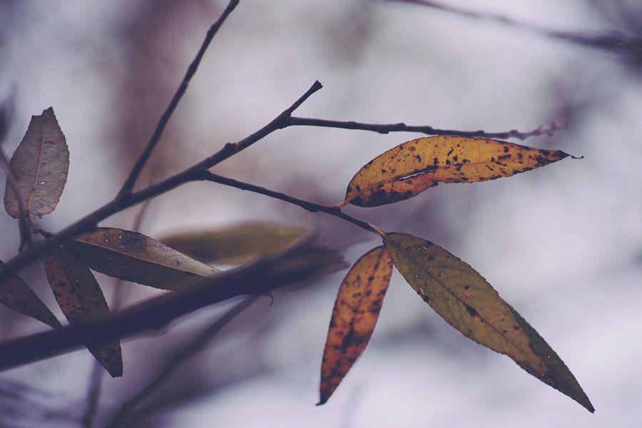 Sad Beauty van Insolitus Fotografie