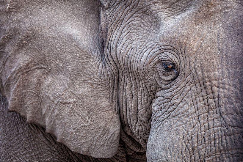 Afrikanischer Elefant von Tilo Grellmann | Photography