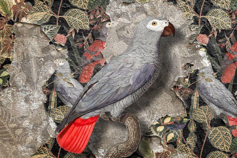 Grey Parrot van Marja van den Hurk