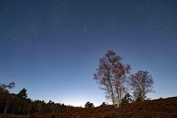 Heide Nacht