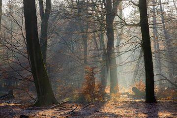 Zonnestralen in een bevroren bos op de Veluwe von Evert Jan Kip