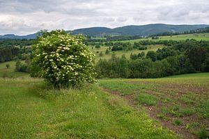 Rothaargebirge, Sauerland, Deutschland