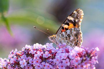 Bezaubernder Frühling mit zartem Schmetterling als entspannender Wandschmuck in Deinem Zuhause! von Christian Feldhaar