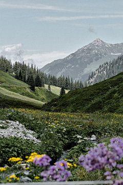 Alpen weide Oostenrijk van Jisca Lucia