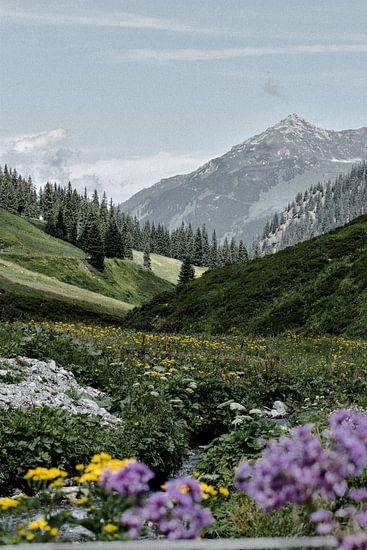 Alpen weide Oostenrijk