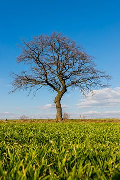Groene weide met een boom aan de horizon in het  voorjaar in Mechelen, Limburg van Kim Willems