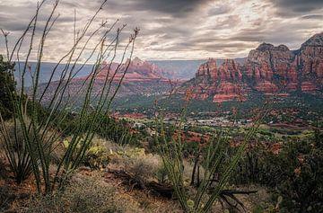 Arizonas Ocotillo von Joris Pannemans - Loris Photography