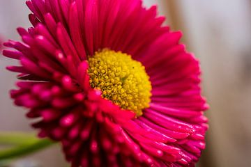 Een prachtige close up van een bloem. van GiPanini