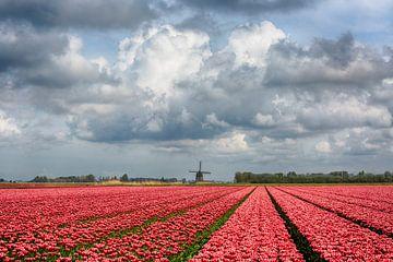 Tulpen met molen van Astrid Volten