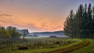 Drie reeën in een herfstlandschap bij zonsopkomst van Jenco van Zalk