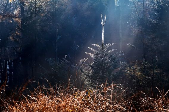 Hiding tree van Olha Rohulya