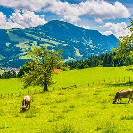 Koeien in de Allgäu van Walter G. Allgöwer