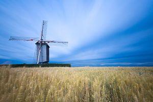 Windmolen in graanveld