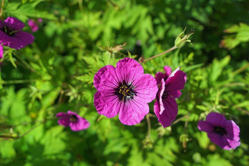 Scotland Flowers van Babetts Bildergalerie