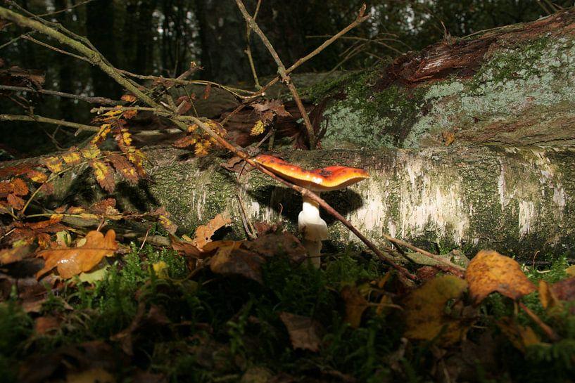 Herfst van Rick Nijman