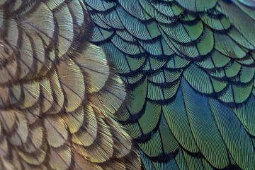 Veren van een wilde Kea (Nestor notabilis) van Beschermingswerk voor aan uw muur