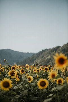 Zonnenbloemen tegen de heuvels in het Zwarte Woud | Kleurrijke reisfotografie | van Trix Leeflang
