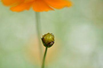 Warmes Orange I von Bianca Dekkers-van Uden