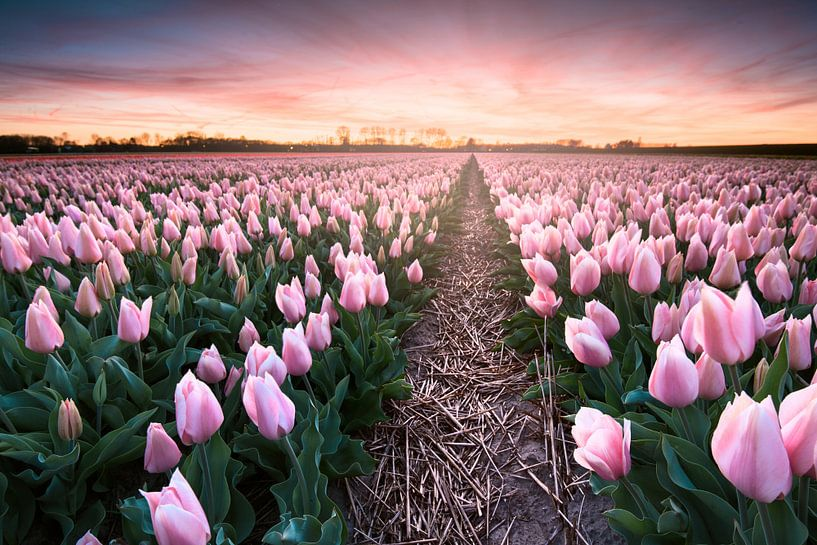 Sweet sunset van Martijn Kort