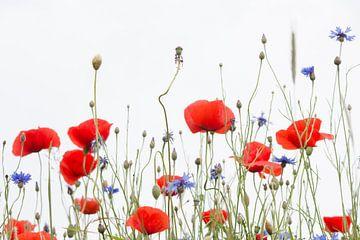 Red Poppy Power (part 2) van Esther Ehren