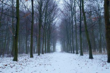 Winter in het bos, sneeuw op het bospad van Discover Dutch Nature