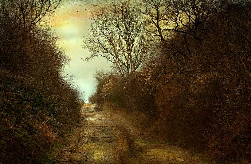 Het licht tegemoet. van Jan Pycke