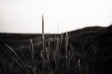 Tranquility van Insolitus Fotografie