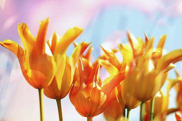 Gele tulpen van Marianna Pobedimova