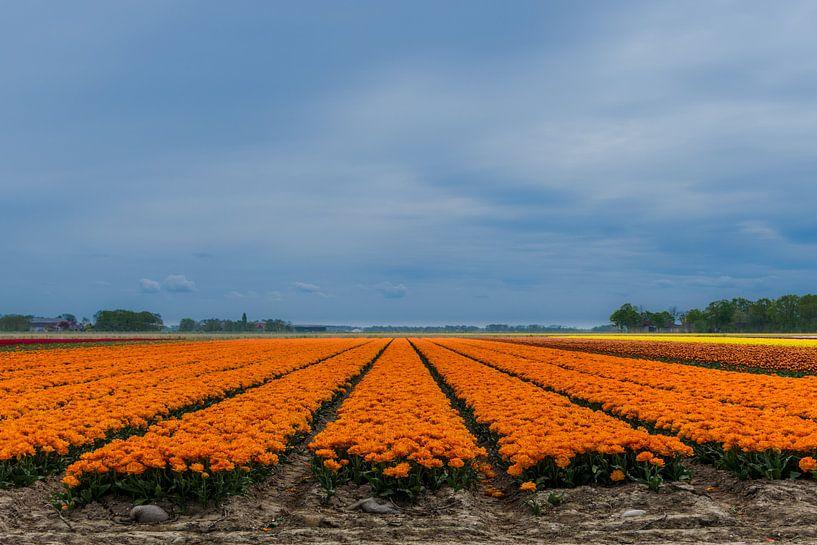 Oranje tulpenstroken van Patrick Verhoef