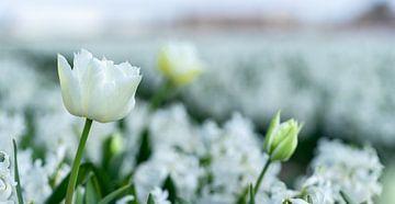 Tulpen tussen hyacinthen van Floris van Woudenberg