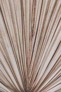 Palm blad textuur van MAIA prints