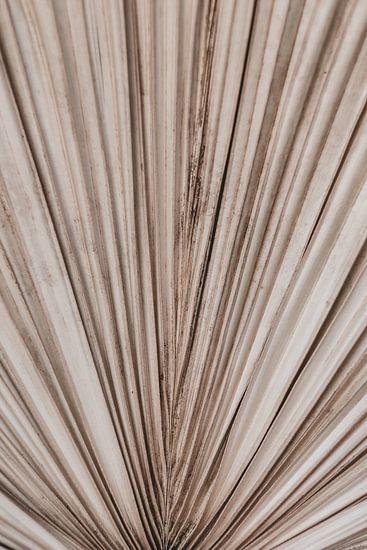 Palm blad textuur