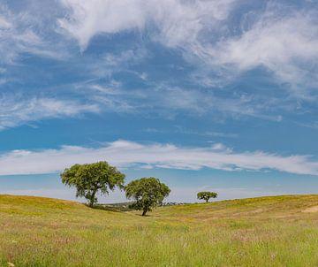 Allein stehende Bäume in einer rollenden Landschaft, Castro Verde, Portugal, Alentejo von Rene van der Meer