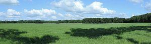 panorama van het Drentse agrarische land