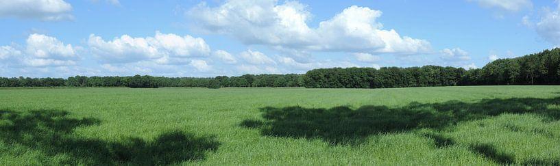panorama van het Drentse agrarische land van Wim vd Neut