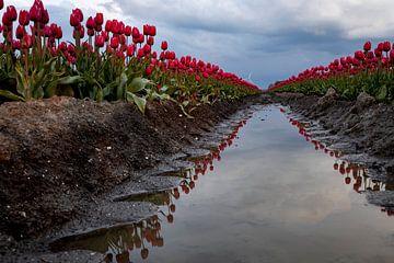 Double Dutch Tulpen von Studio de Waay