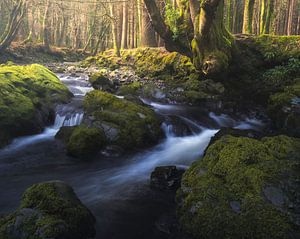 Rivier in een Sprookjesbos van