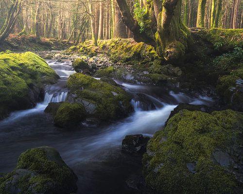 River in a fairytale forest von Maaike van Tol