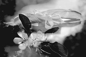 Ballet en sakura van
