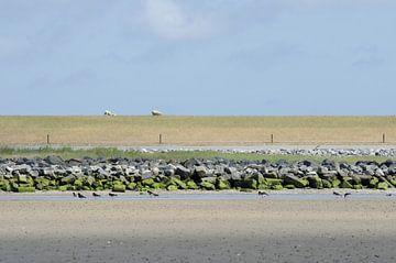 De dijk bij Hollum op Ameland