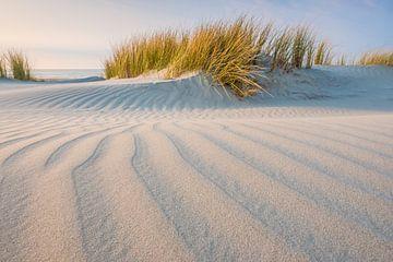 Helmgras duinen Terschelling van Jurjen Veerman