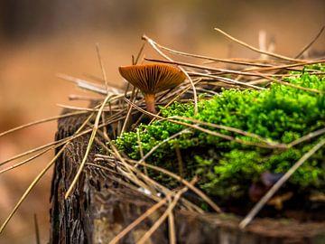 Champignon de forêt
