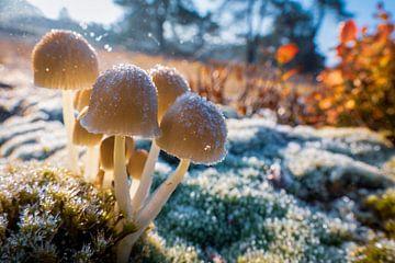 eisige Pilze von Jayzon Photo