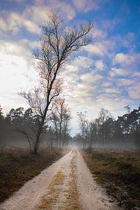 Sandweg mit Nebel im Wald (Veluwe) von Frans Roos