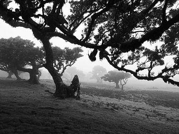 Schief - Gewundener Baum im Nebel von BHotography