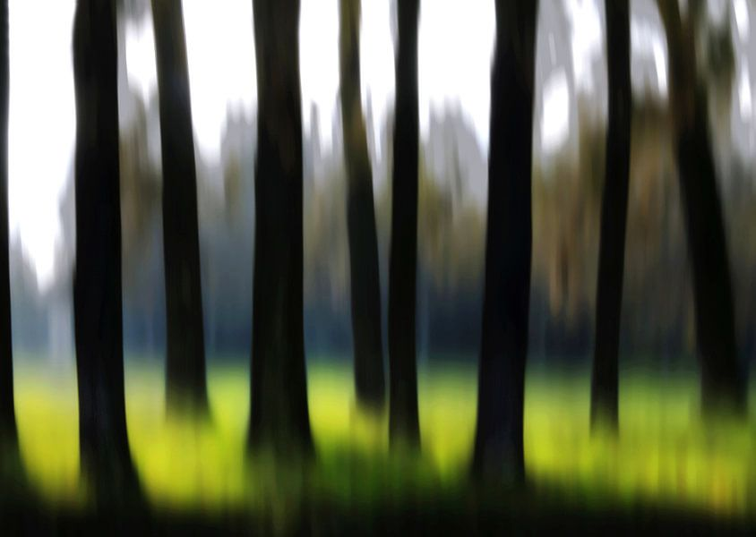 Lente bos van Fons Bitter